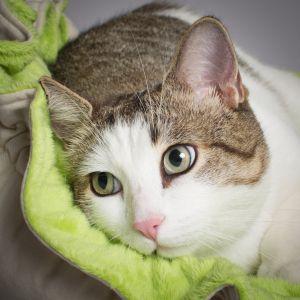 Kiwi le chat